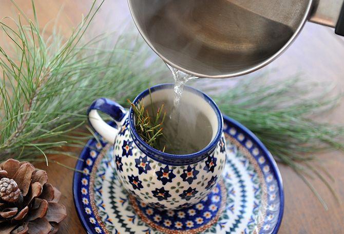 Так заваривают сосновый чай